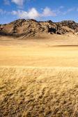 Użytki zielone ziarna żółty rosnące malowniczej dolinie północnych Gór Skalistych — Zdjęcie stockowe