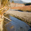 Winter Along Mountain Stream Hoh River Banks Olympic Mountains — Zdjęcie stockowe