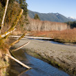 Winter Along Mountain Stream Hoh River Banks Olympic Mountains — ストック写真
