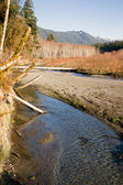 Winter Along Mountain Stream Hoh River Banks Olympic Mountains — Stock Photo