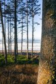 Trees Line Higher Ground Above Paciifc Ocean Beach Shoreline — Stock Photo