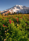 Cascade Range Rainier National Park Mountain Paradise Meadow Wildflowers — Stock Photo