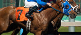 Seven Horse Rider Jockey Come Across Race Line Photo Finish — Stock Photo