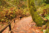 Marked Path Rainforest Trail Pacific Northwest West Coast — Stock Photo