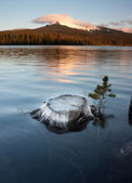 Partially Submerged Stump Lakefront Big Lake Mt Washington Oregon — Stock Photo