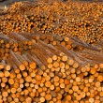 Постер, плакат: Log Ends Wood Rounds Cut Measured Tree Trunks Lumber Mill