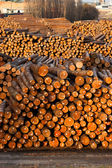 Log Ends Wood Rounds Cut Measured Tree Trunks Lumber Mill — Stock Photo