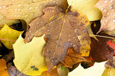 Leaves Fallen Winter Nature Ground Autumn Season Change Dew Drop — Foto de Stock