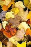 Hojas caída invierno suelo naturaleza temporada otoño cambiar gota de rocío — Foto de Stock