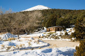 Historic Cabin Winter Day Great Basin National Park Southwest US — Stock Photo