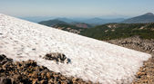 Large Breed Dog Laying Snowfield High Mountain Oregon Cascade Trail — Stock Photo