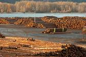 Large Timber Wood Log Lumber Processing Plant Riverside Columbia — Stock Photo