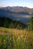 Wildflowers Cover Hillside Olympic Mountains Hurricane Ridge — Foto de Stock