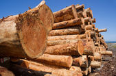 Timber Wood Logging Industry Lumber Raw Logs Stacked — Stock Photo