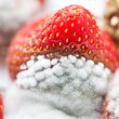 Mould on strawberries — Stock Photo