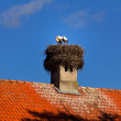 Storks on the roof — Stock Photo