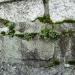 Stock Photo: Grows grass in wall