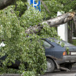 Stock Photo: Tree fell on car