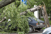 Tree fell on car — Stock Photo