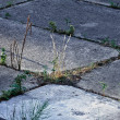 Stock Photo: Grass grows through concrete slabs