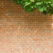 Brick wall with leaves — Stock Photo