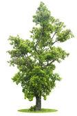 Green Tree isolated — Stock Photo