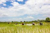 Farmer in The Growing season — Stock Photo