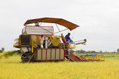 Harvester Combine Grain at rice field — Stock Photo