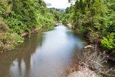 Zelený les a řeka — Stock fotografie