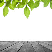 Wood and leaf on white — Stock Photo