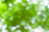Nature green bokeh background — ストック写真