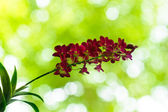 Purple orchid flower with green bokeh — 图库照片