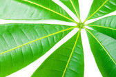 A beautiful lush green leaf. — Stock Photo