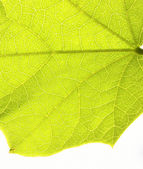 Close up of green leaf — Stock Photo