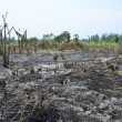 Slash and burn cultivation — Stock Photo