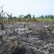 Stock Photo: Slash and burn cultivation