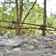 Stock Photo: Rusty barbed wire