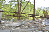 Rusty barbed wire — Stockfoto