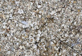 Carcass of Shell — Stock Photo