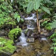 Rill in forest — Stock Photo