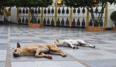 Due cani dormendo — Foto Stock