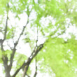 Defocused tree and green leaf — Stock Photo
