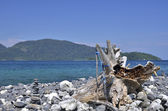 Pebble and tree stump on island, Lipe island — Stockfoto