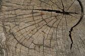 деревянные текстуры — Стоковое фото