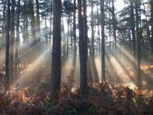 Słońca przez drzewa — Zdjęcie stockowe