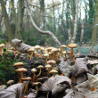 Stock Photo: Woodland Fungi