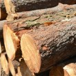 Stack of cut trees — Stock Photo