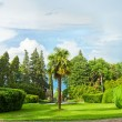 Stock Photo: Panorama of beautiful nature in Georgia - park with green trees