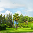 Panorama of beautiful nature in Georgia - park with green trees — Stock Photo #12783197