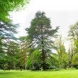 Panorama of beautiful nature in Georgia - park with green trees — Stock Photo